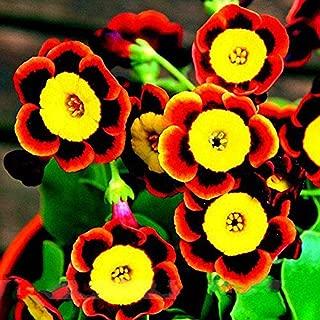 KOUYE GardenSeeds- 100pcs Garden Hanging Petunia