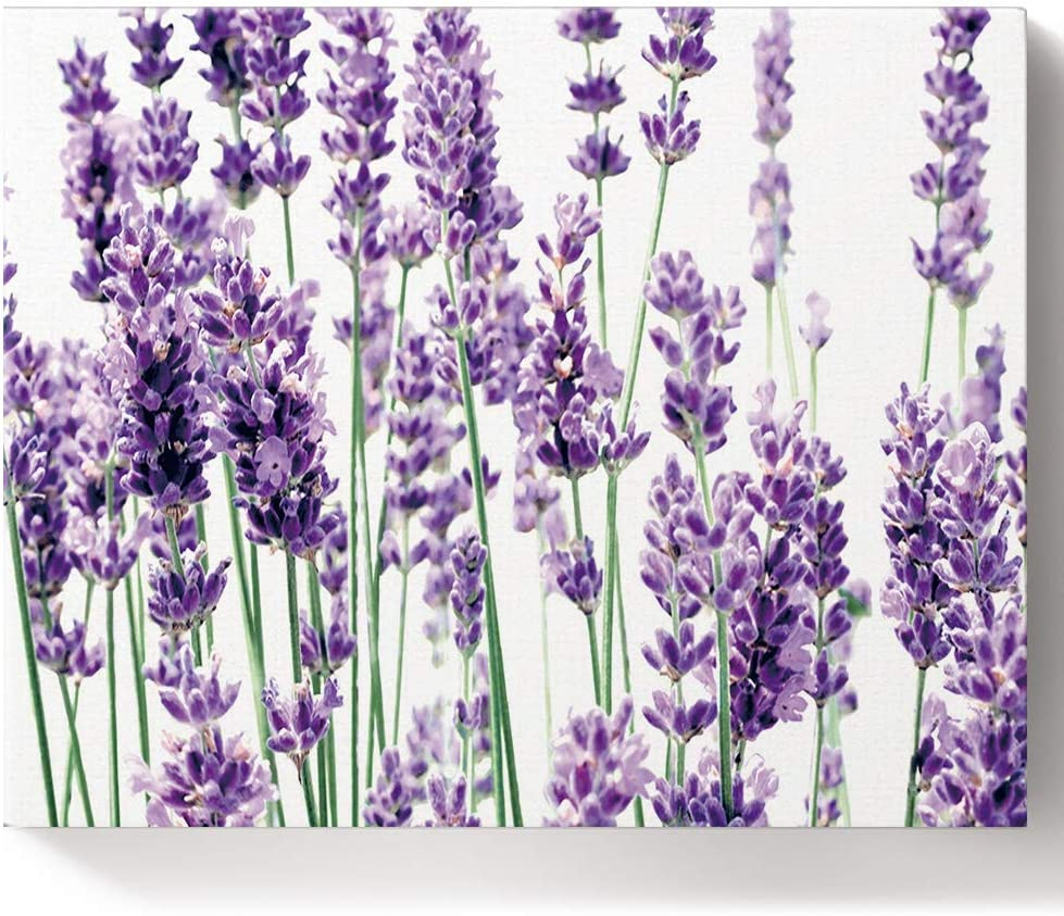Paint It is very popular by Numbers Kits Idyllic Purple Lavender Oil Mail order Flowers Pa DIY