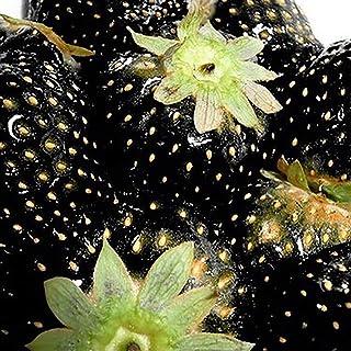 TOYHEART 100 Piezas De Semillas De Frutas De Primera Calidad, Semillas De Fresa, Nutritivas, Ricas En Vitaminas, Multicolo...