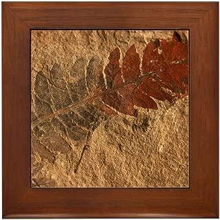 framed fossil art