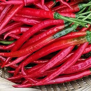 100 Stück/Beutel Chilisamen Ohne GVO Leicht Zu Züchten Rot Voller Vitalität Gemüsesamen Für Gartenpflanzen Gartensamen Peperoni-Samen