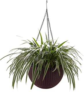 T4U Plastic Hanging Planter Coffee Brown, Self Watering Basket Round Flower Plant Orchid Herb Holder Container for Home Office Garden Porch Balcony Wall Indoor Outdoor Decoration Gift