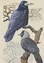 ملصق فني جميل مطبوع عليه Charles Frederick Tunnicliffe Giclee على ورق مشهور بأوراق شهير، ديكور جداري رقم XZZ
