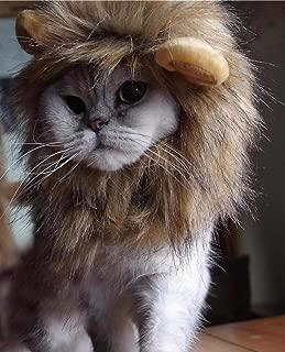 cat wearing lion mane
