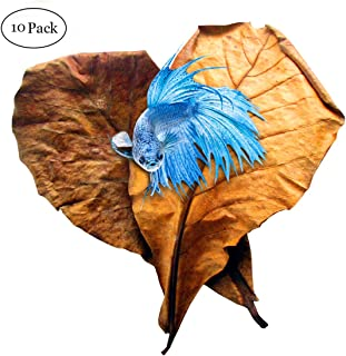 SunGrow Indian Almond Leaves for Betta, 8 Inches Long, Induce Breeding and Boost Immunity, Reduce Stress, No Toxic Chemica...