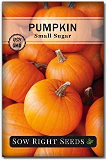 Sow Right Seeds - Small Sugar Pumpkin Seed for Planting - Non-GMO Heirloom Packet with Instructions to Plant a Home Vegeta...