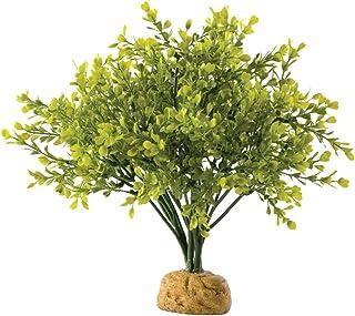 Exo Terra Terrarium Plant Boxwood bush