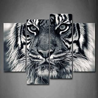 Best white tiger photos Reviews