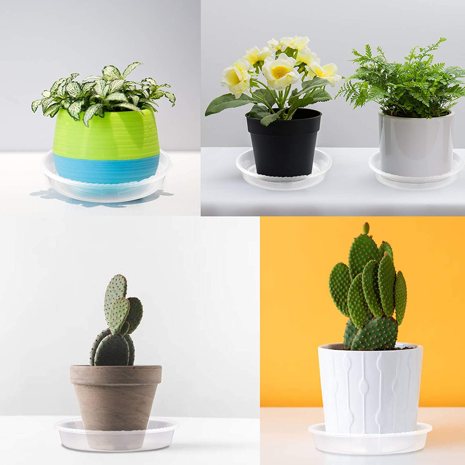 beijifeng Plant Saucer 6 Pack Plastic Tray for Plant Pots 6 Inch Thicker Plant Pot Saucer 6 PCS Waterproof Durable for Outdoor and Indoor Plants Clear