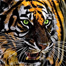 DIY Oil Paint by Number Kit for Adults Beginner 16x20 Inch - Roaring Tiger,Drawing with Brushes Living Room Decor Decorations Gifts (Framed)