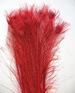 10 Pcs Peacock Bleached Feathers (30''- 35