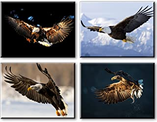 Best beautiful eagle pictures Reviews