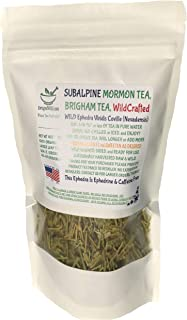 Mormon Tea - Brigham Tea - Ephedra Tea - SUBALPINE | USA WILDCRAFTED 1/4LB Dried