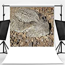Well Camouflaged Regal Horned Lizard in Organ Pipe National Monument Theme Backdrop Cartoon Backdrops Photography Backdrop,Arizona,10x20ft