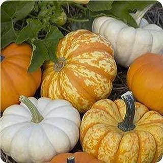 Harvest Blend Pumpkin Mix 15 Seeds 3 Little Cuties Hooligan, Gooligan & Bumpkin