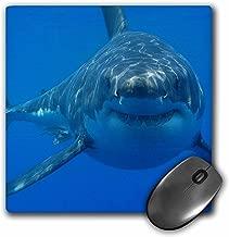 3dRose LLC 20.3x 20.3x 0.6cm لوحة ماوس ، تحت الماء القرش الأبيض رائعة Smiling Shark (MP _ 108355_ 1)