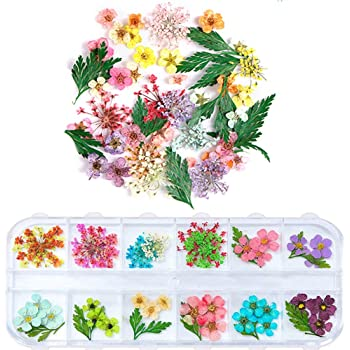 1 Box Dried Flowers for Nail Art, UNIME 16 Colors Dry Flowers Mini Real Natural Flowers Nail Art Supplies 3D Applique Nail Decoration Sticker for Tips Manicure Decor (Mixed Gypsophila Flowers)