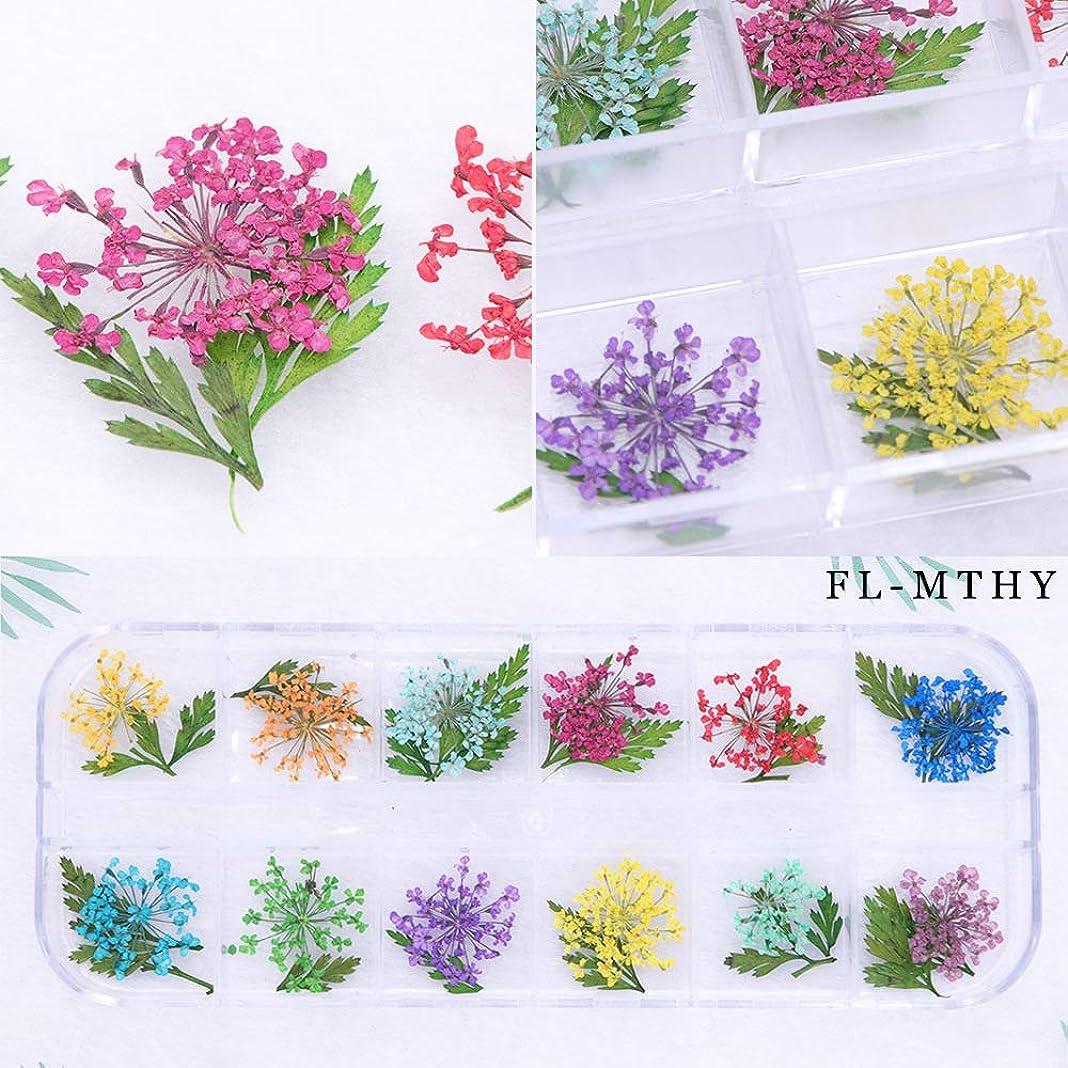 魅力的海藻廃棄1ボックス ドライフラワー レースのような柄 天然の押し花 12色 ネイルデコ ネイルアート 春 (3)