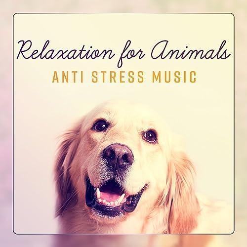Yoga Cats by Cats Music Zone on Amazon Music - Amazon.com
