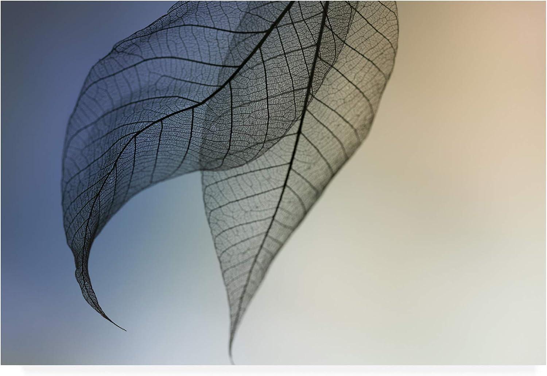 Trademark Fine Art Cavatina by Shihya Kowatari, 12x19