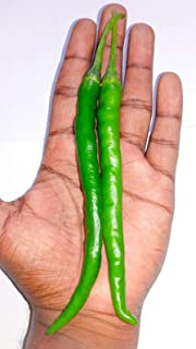 10 pusa jwala hot Indian Finger Chilli Seeds Used in Indian Cooking