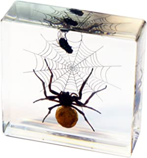 REALBUG Spider & Fly Desk Decoration