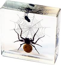 REALBUG Spider & Fly Desk Decoration