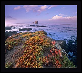 Iceplant Covering Coastal Rocks, Point Piedras Blancas, California by Tim Fitzharris 15