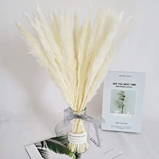 30 Pcs Natural Dried Pampas Grass Reed Grass Plume Dried Flower Phragmites Communis for Wedding Flower Arrangements Home D...