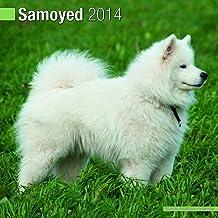 Samoyed 2014