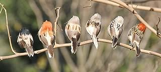 artificial birds for crafts