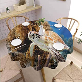 DILITECK Turtle Dining Round Tablecloth Coral Reef and Sea Turtle Close Up Photo Bonaire Island Waters Maritime Easy to Clean Diameter 70
