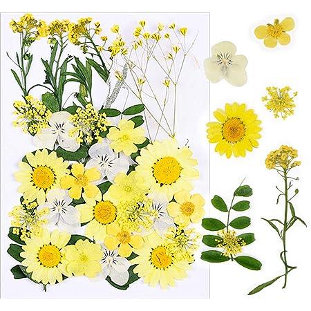 VINFUTUR 33pcs Fleurs séchées Naturelles Vraies Fleurs Pressées Decoration pour Résine Epoxy Bougie Bricolage Scrapbooking Nail Art Artisanat Maquillage