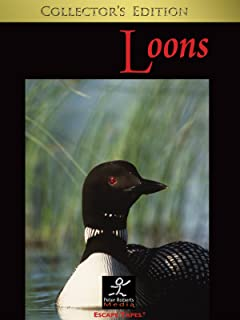 Loons: Relaxing Nature Video