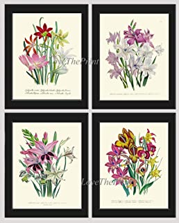 Botanical Gladiolus Flower Art Print Set of 4 Prints Beautiful Antique White Yellow Pink Flowers Spring Summer Garden Home Room Wall Decor Unframed LOU