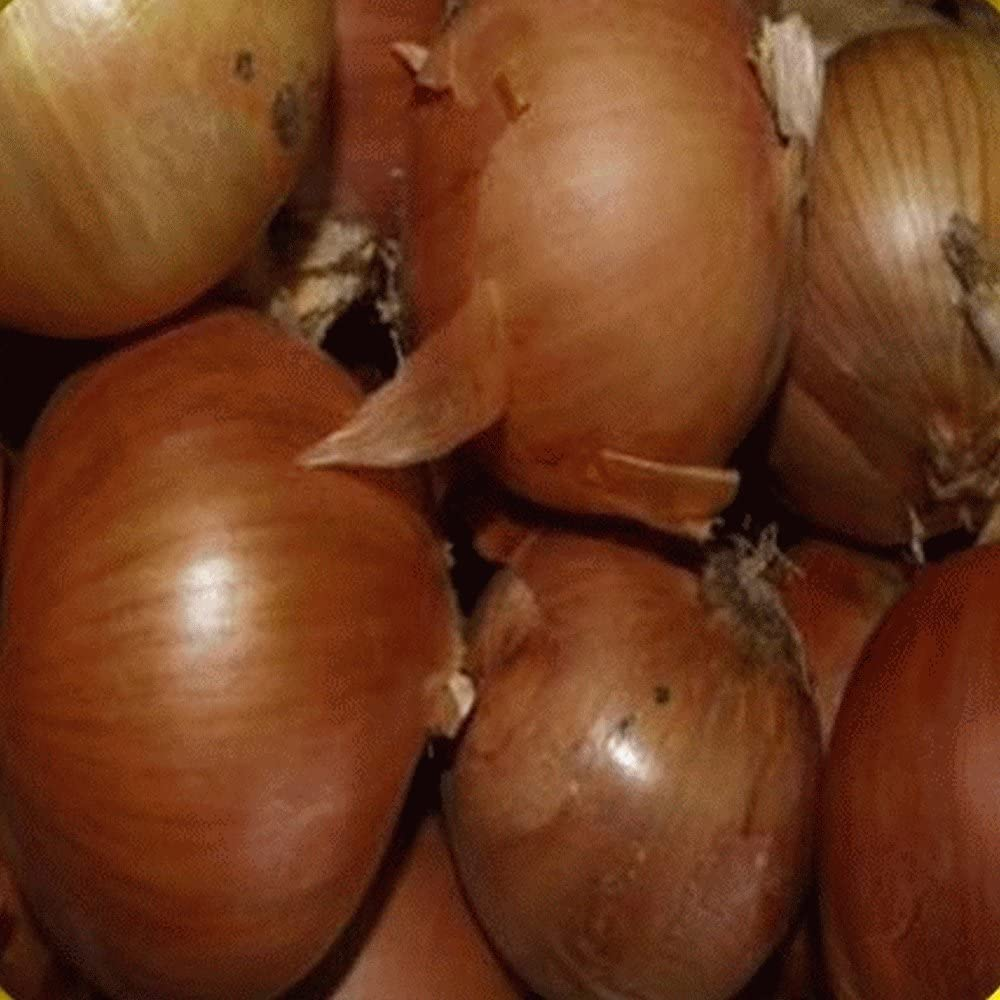 1 Oz Free shipping New Yellow Sweet Seeds Super special price Spanish Onion