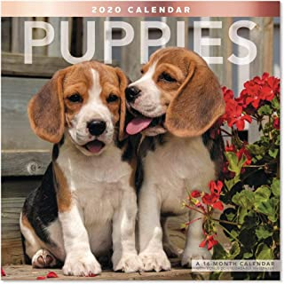 2020 Puppies Wall Calendar (LME1001020)