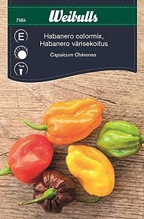 Weibulls Chilipeppar Habanero mix Capsicum Chinens