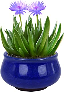 Dahlia 3.5 Inch Mini Crackle Glaze Ceramic Succulent Planter/Plant Pot/Flower Pot, Blue