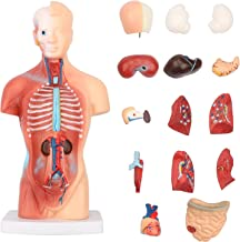 Human Body Model Torso Anatomy Doll 15 Removable Parts Skeleton Visceral Brain with Detailed Manual 10.5inch Height