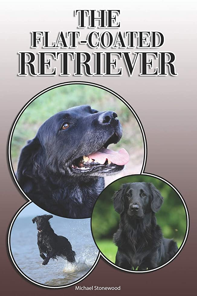 リマークスリップシューズ復活するThe Flat-Coated Retriever: A Complete and Comprehensive Owners Guide to: Buying, Owning, Health, Grooming, Training, Obedience, Understanding and Caring for Your Flat-Coated Retriever