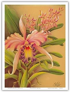 Pink Cattleya Orchid Hawaii - Vintage Hawaiian Airbrush Art by Frank Oda (Hale Pua Studio) c.1940s - Hawaiian Master Art Print - 9in x 12in