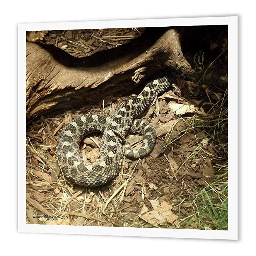 3dRose ht_34529_2 Eastern Massasauga Rattlesnake Iron on Heat Transfer Paper for White Material, 6 by 6