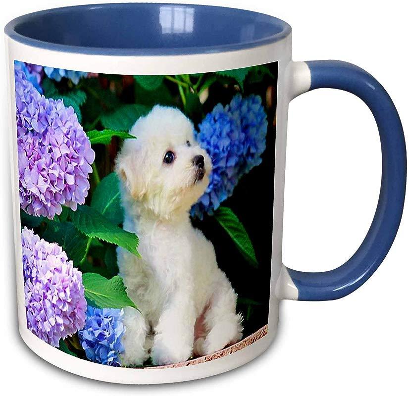 3dRose Mug 80886 6 Adorable Bichon Frise Puppy Among Hydrangeas Two Tone Blue Mug 11 Oz Multicolor
