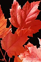 2019 Weekly Planner Red Maple Leaves Autumn Season 134 Pages: (Notebook, Diary, Blank Book) (2019 Planners Calendars Organizers Datebooks Appointment Books Agendas)