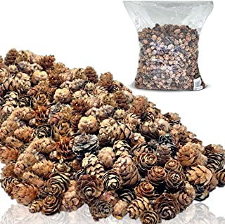 BANBERRY DESIGNS Natural Brown Pinecones - Approx. 1500 Pieces (2 lb Bag) of Assorted Sized Pine Cones - Fall and Christmas Bowl Filler Crafts - Unscented