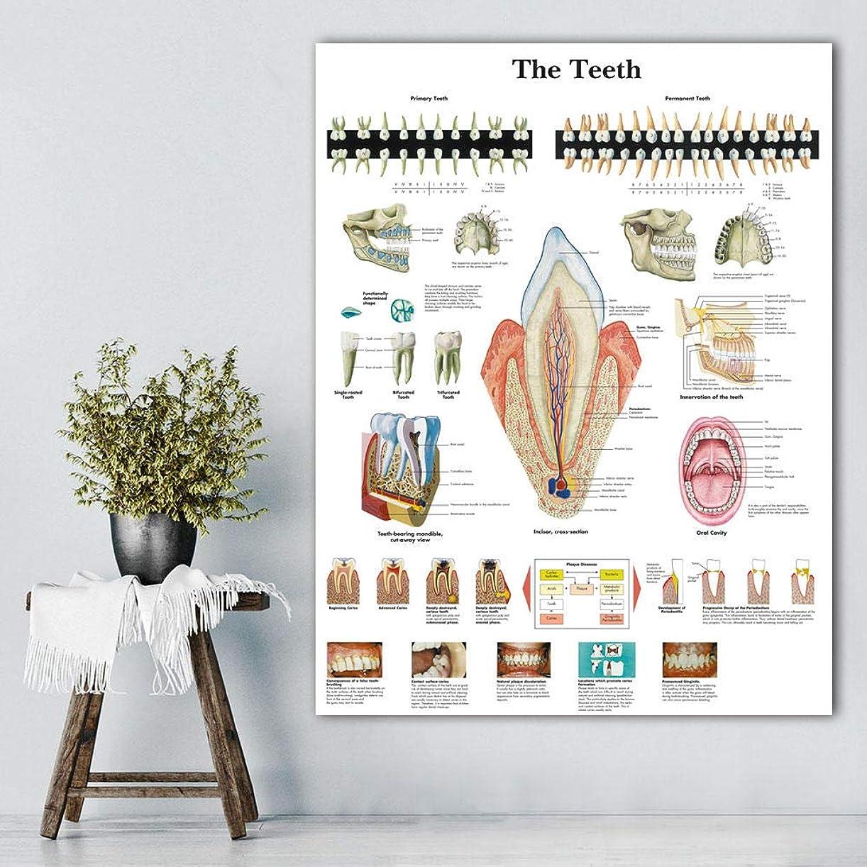 埋め込む堀花婿モジュラー写真壁アートプリント解剖チャートポスターとプリント人間の歯チャートキャンバスの絵画医学教育オフィス-60x80cm(フレームなし)