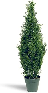 National Tree 36 Inch Arborvitae Tree in Dark Green Round Plastic Pot (LMC4-700-36-1)