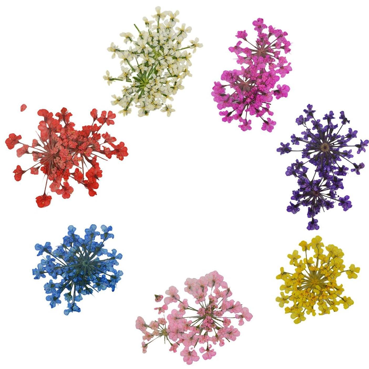 前者出します犯人押し花7色セット 小さい花弁のドライフラワーで可愛いです。