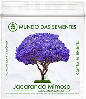 10 Sementes Jacarandá Mimoso Mimosifolia Azul Árvore